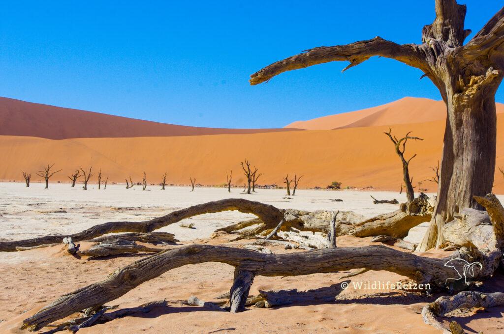 Een dode boom in de deadvlei, namibwoestijn