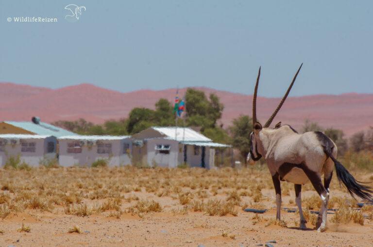 Highlights van Namibië