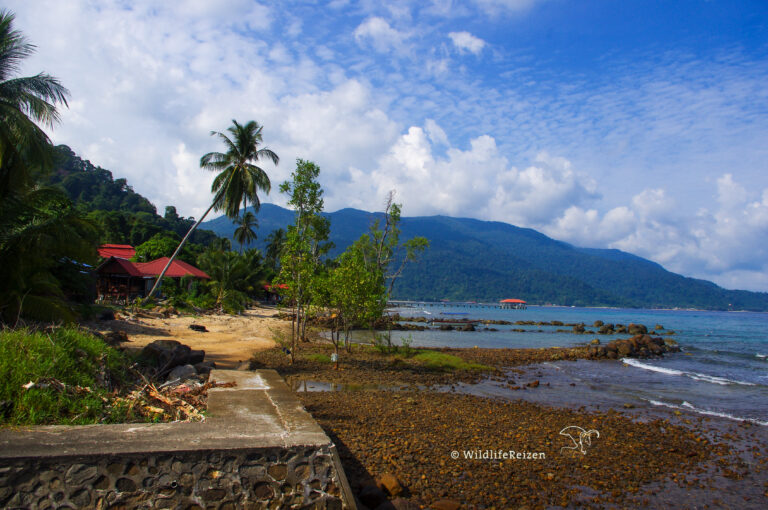 Pulau Tioman
