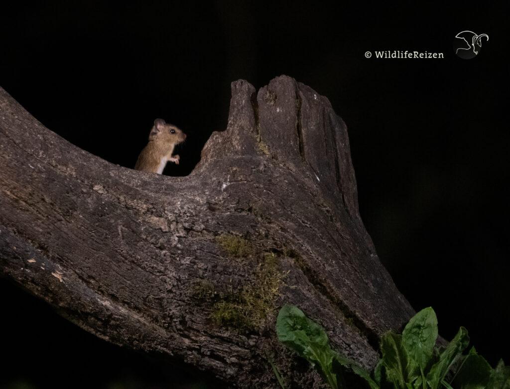 Een muis op een boom in de nacht