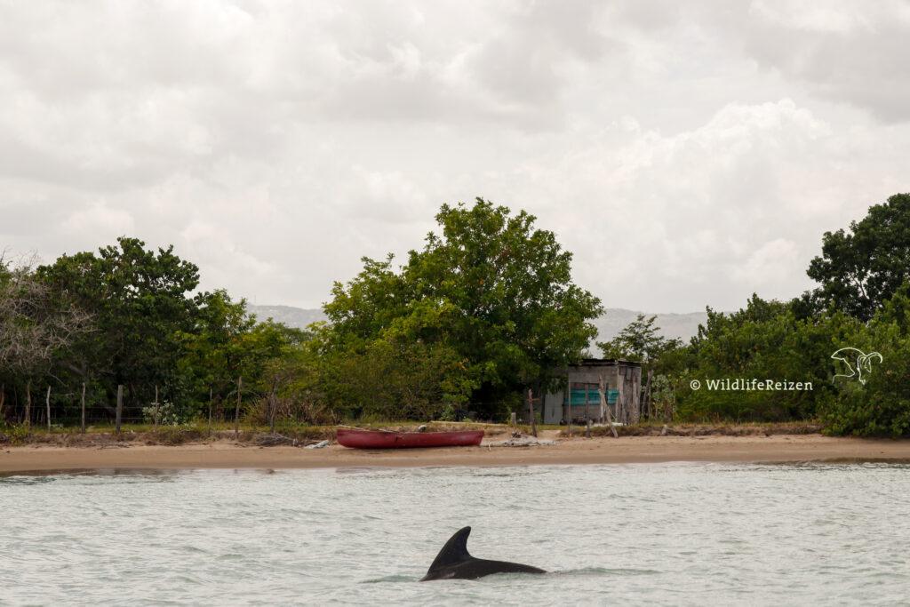 Dolfijn in de zee