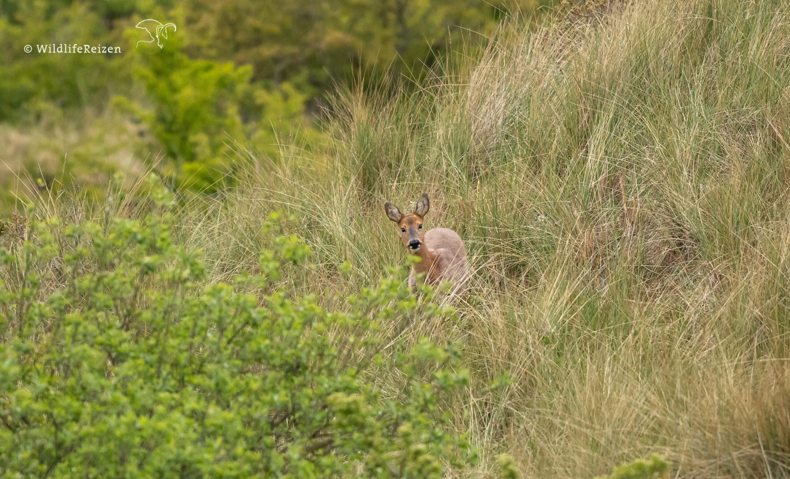 5 Leukste activiteiten in de natuur op Ameland
