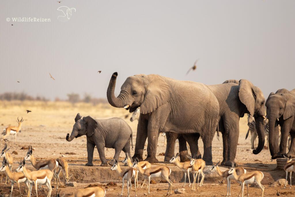babyolifant met moeder