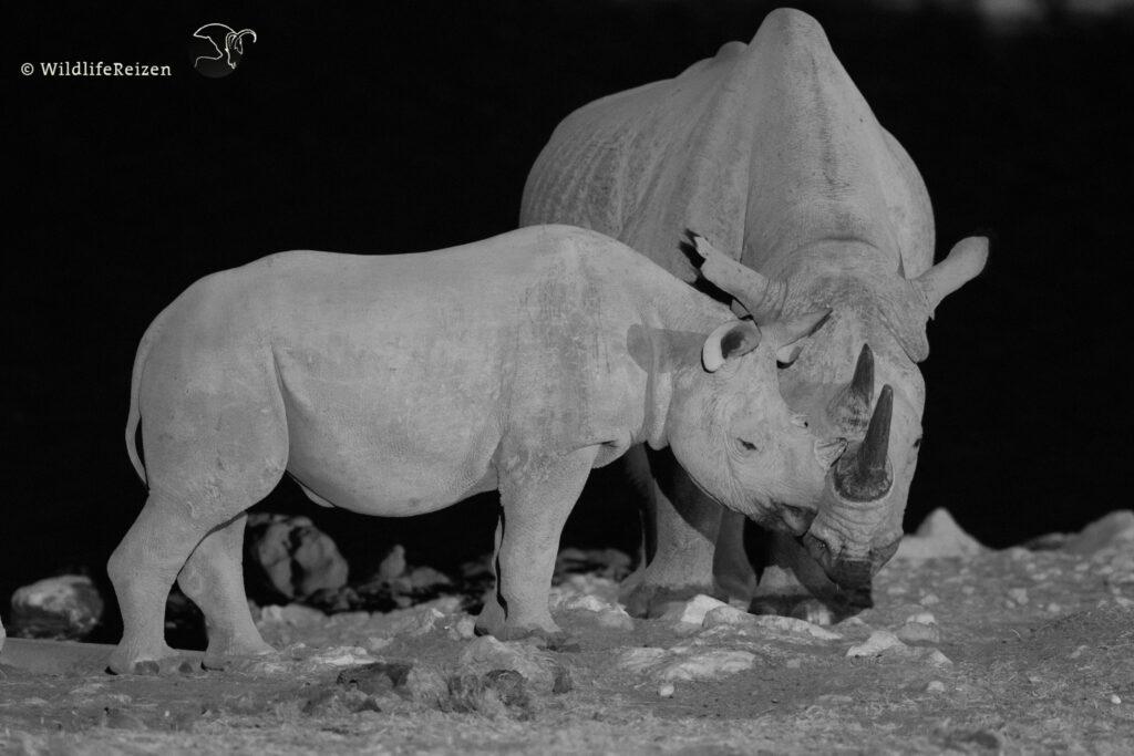 Zwarte neushoorn baby met moeder in de nacht